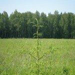 продажа земельных участков на рублевском шоссе
